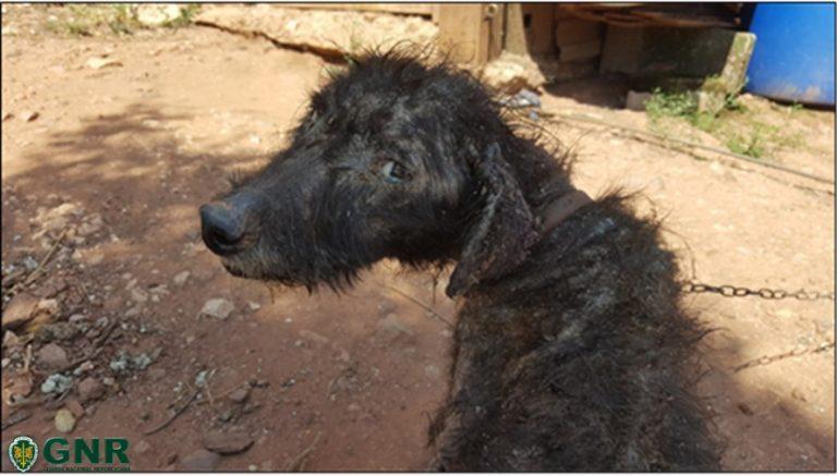 Rádio Regional do Centro: Coimbra: Casal identificado por maus tratos a um cão