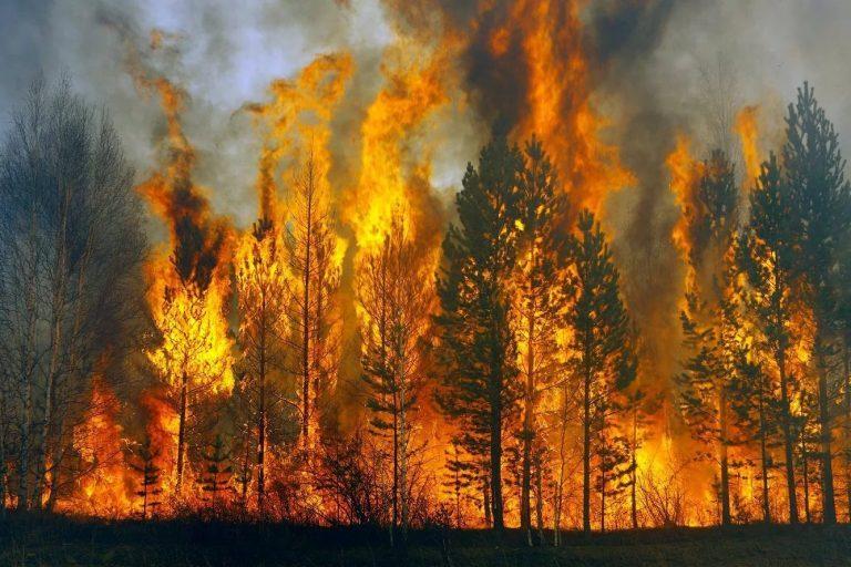 Rádio Regional do Centro: Detenção de incendiário florestal no concelho de Soure