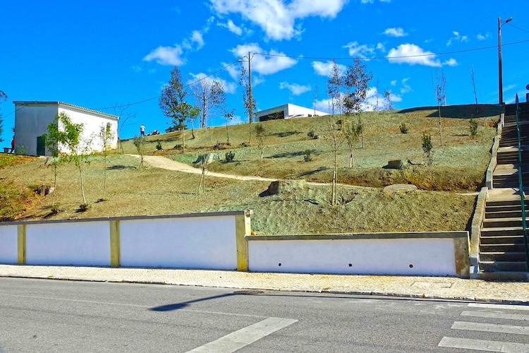 Rádio Regional do Centro: Coimbra vai plantar quase 2000 árvores em 2021