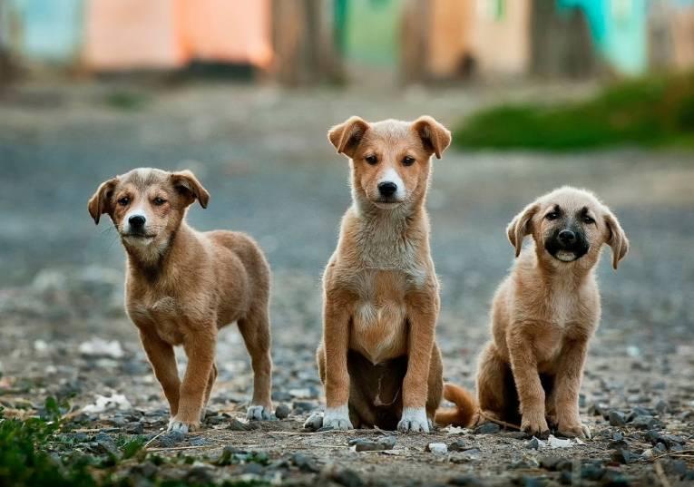Rádio Regional do Centro: Figueira da Foz: Centro de Recolha Animal acolheu 675 animais em 2020